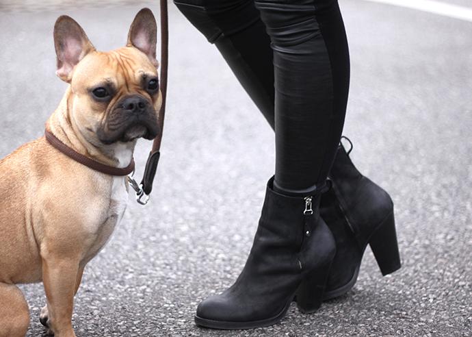 hellblaue Lederjacke von Zara, Topshop Pistol Akira Boots, französische Bulldogge, hellblauer Schal von Zara, hellblaue Tasche H&M
