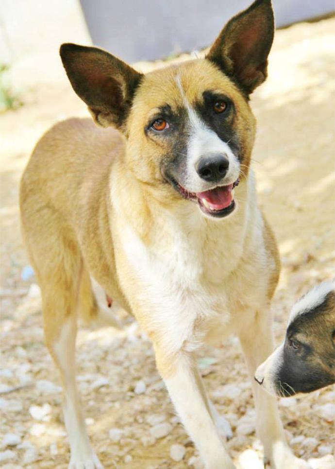Tierengel Bulgarien, Tiere retten, Tiere in not, Straßenhunde retten