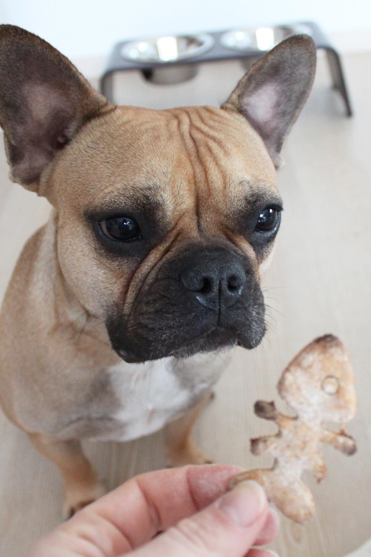 who is mocca, blogger tirol, fashionblog, foodblogger, hundekekse, haferflocken, miacara, dogbar, rezept, hundenapf, frenchie, husky, fischgraete, ausstechform, Haferflocken-Kekse für Hunde