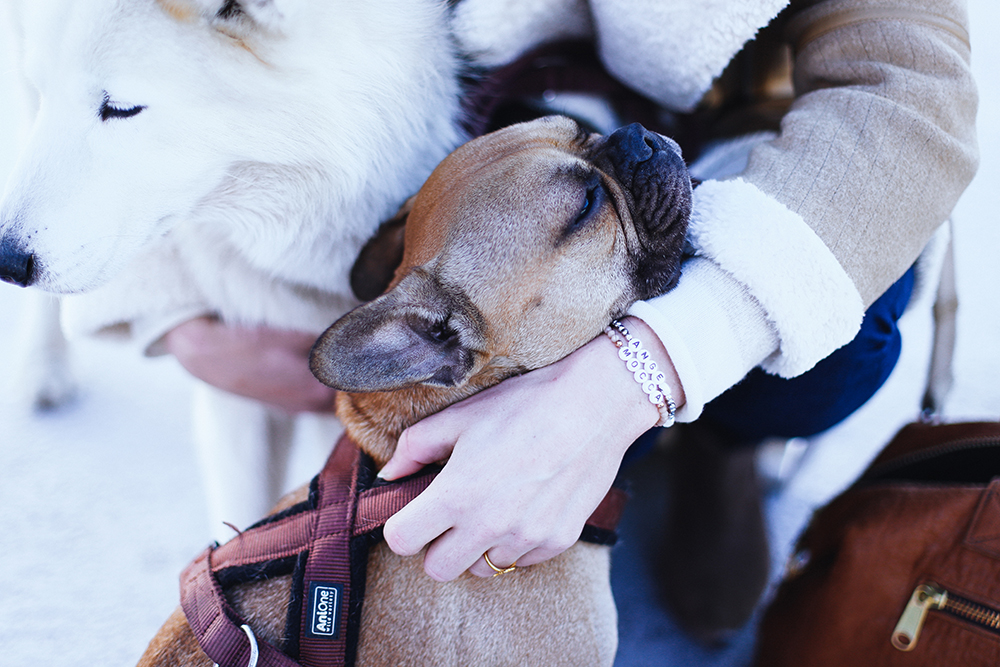 who is mocca, modeblogger, fashionblogger, acne lookalike biker jacke, velocite jacket, zara acne jacke, husky, innsbruck, streetstyle, frenchie, skinny jeans, layering, lagenlook, whoismocca.com, wenn ich ein Hund wäre, zweierlei, kolumne