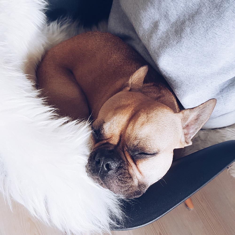 who is mocca, modeblog, fashionblog, influencer, zweierlei, kolumne, wenn ich ein Hund wäre, frenchie, husky, whoismocca.com