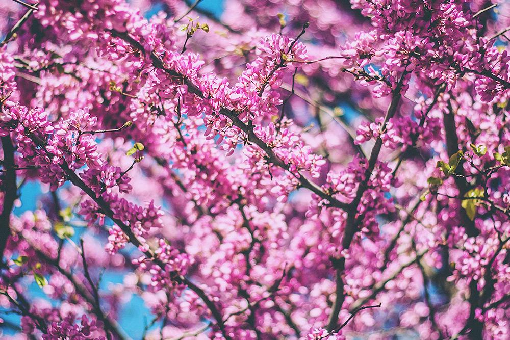 Frühlingsanfang, Frühlingsbeginn, 10 Dinge die man vor dem Frühling noch erledigen sollte, Lifestyle Blog, Innsbruck, Österreich, whoismocca.com