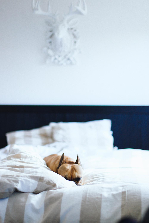 gemuetliches schlafzimmer tipps ideen interior einrichtung bett matratze dekoration inspiration. Black Bedroom Furniture Sets. Home Design Ideas