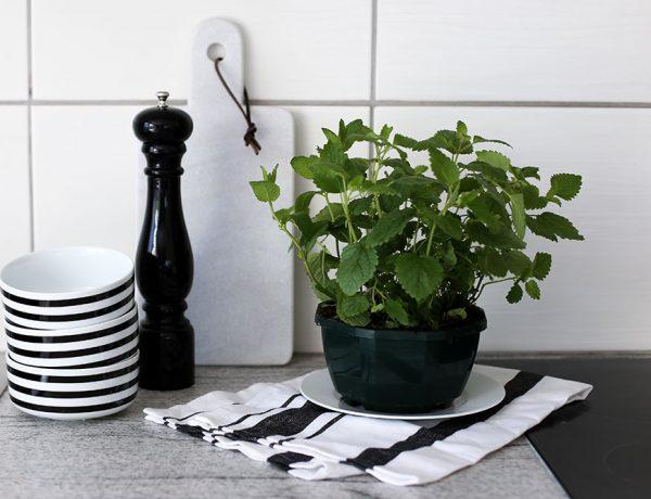 Küchen Dekoration, Kräuter, Pfeffermühle, Marmor Schneidebrett, Pimp my Kitchen, Küche verschönern, Küchen Hacks, Do It Yourself, Interior Blog, Magazin, whoismocca.com