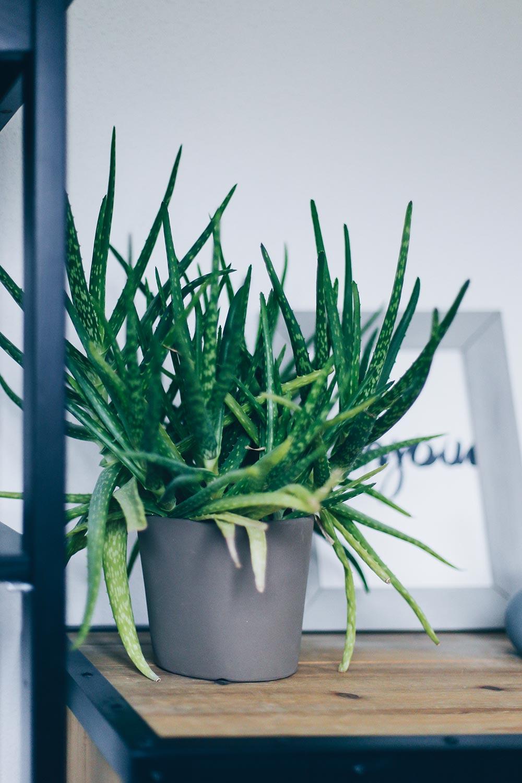 der pflanzen guide  stylische und pflegeleichte