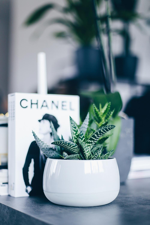 der pflanzen guide 15 stylische und pflegeleichte zimmerpflanzen. Black Bedroom Furniture Sets. Home Design Ideas