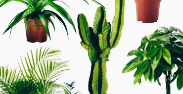 Der große Pflanzen-Guide, 15 stylische und pflegeleichte Zimmerpflanzen, Topfpflanzen, wenig Wasser, wenig Licht, wenig Pflege, Wohnen mit Pflanzen, Interior Blog, Interior Magazin, www.whoismocca.com