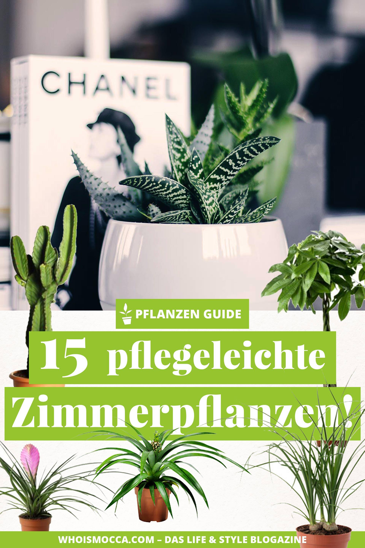 Der pflanzen guide 15 stylische und pflegeleichte zimmerpflanzen - Zimmerpflanzen ohne licht ...