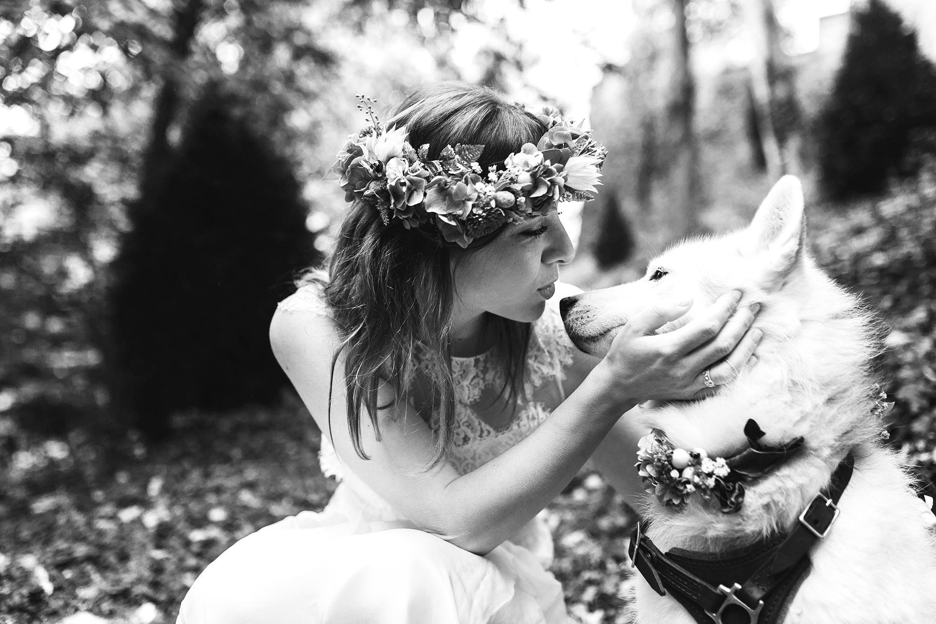 Warum Hunde eigentlich nie wirklich sterben, Husky Angel, www.whoismocca.com