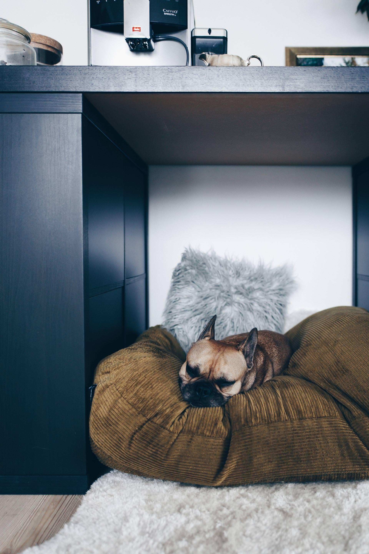 Anzeige, Sauberer Haushalt mit Hund, Alltag und Leben mit Hund, Bona Spray Mop Erfahrungen, Testbericht, Erfahrungsbericht, Produkttest, Hundeblog, Tipps und Tricks, Style Blog, sibirischer Husky, französische Bulldogge, www.whoismocca.com