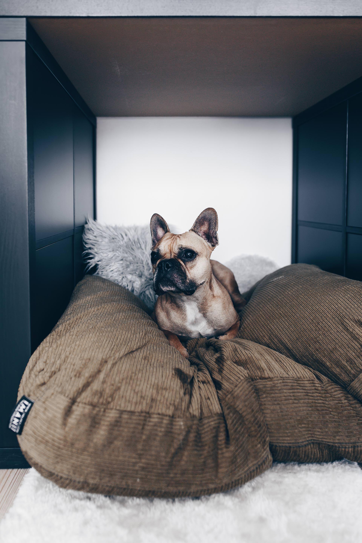 Wildborn Hundefutter Erfahrungen, getreidefreies Hundefutter, Frenchie, Husky, Hundefutter Testbericht, Wildborn Soft Diamond, Wildborn Soft Jewel, Hundeblog, Style Blog, www.whoismocca.com