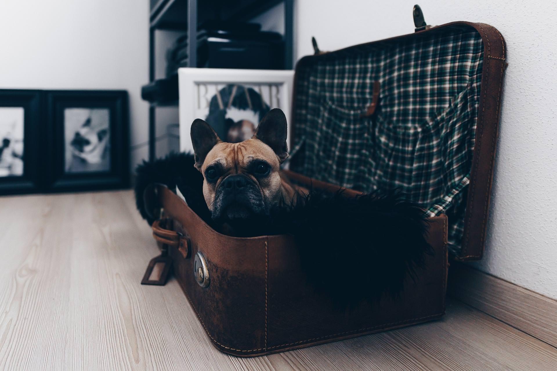 Berufstätig mit Hund, Vollzeit Arbeit und Hund, Hund zur Arbeit mitnehmen, Hund und Arbeit miteinander vereinen, Hundeblog, Karriere Blog, www.whoismocca.com