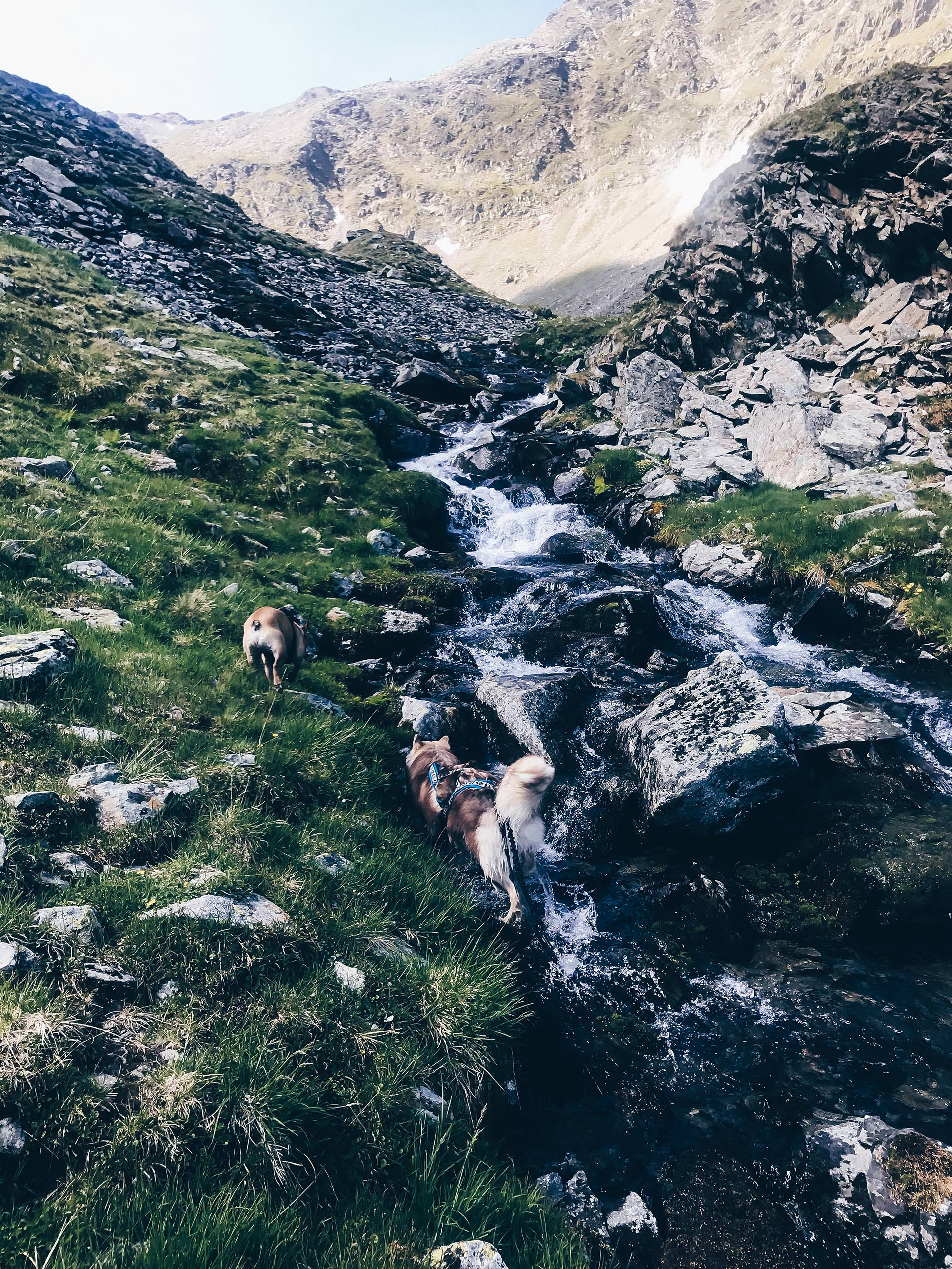 Wandern mit Hund in Tirol, Hundstalsee, Inzinger Alm, Leben mit Hund, Alltag mit Hund, Hundeblog, Wandertour mit Hund, Style Blog, sibirischer Husky, französische Bulldogge, www.whoismocca.com