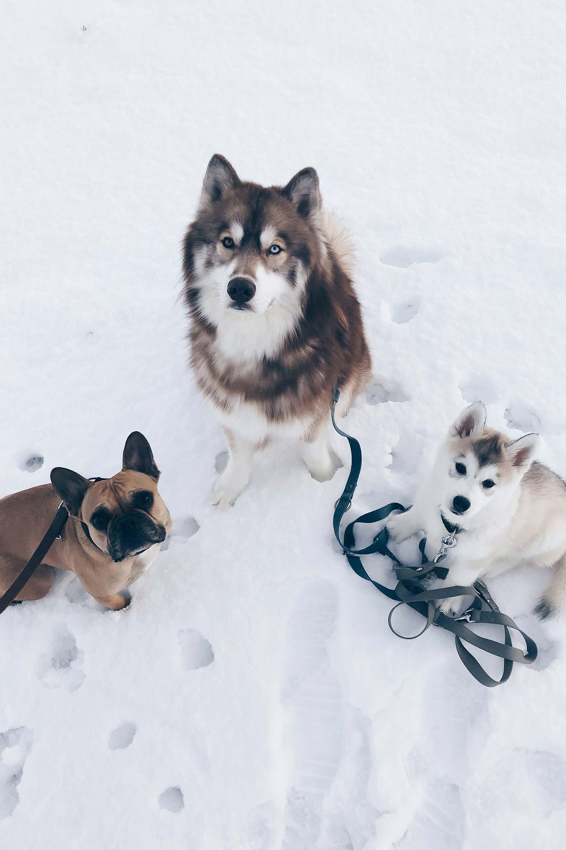 Hundeblogger aus Österreich, Hundeblog mit drei Hunden, Mehrhundehaltung, Hunde Tipps und Tricks, Leben und Alltag mit Hund, The Pawsome Tyroleans, www.thepawsometyroleans.com