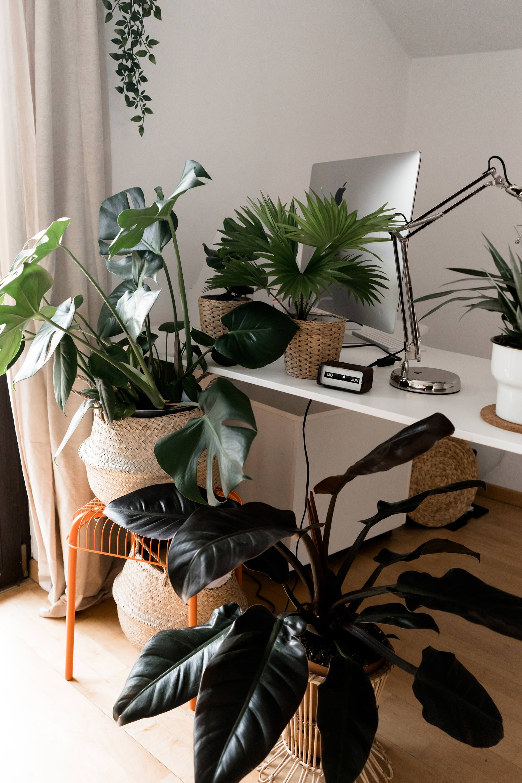 mit gr nen zimmerpflanzen eine tolle oase schaffen der. Black Bedroom Furniture Sets. Home Design Ideas