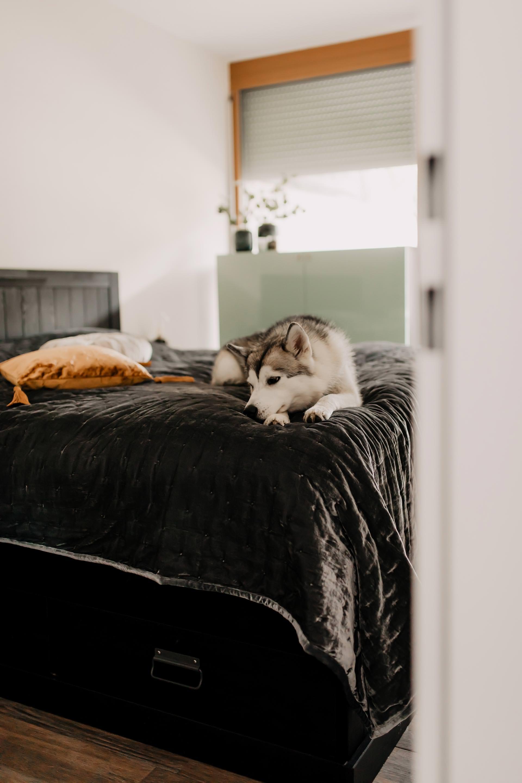 Auf meinem Interior Blog zeige ich dir Wohnideen, Einrichtungstipps und Einblicke in unser neues Zuhause. So haben wir unser Wohnzimmer, Küche, Essbereich und eine Wand mit Konsole gestaltet. www.whoismocca.com #schlafzimmer