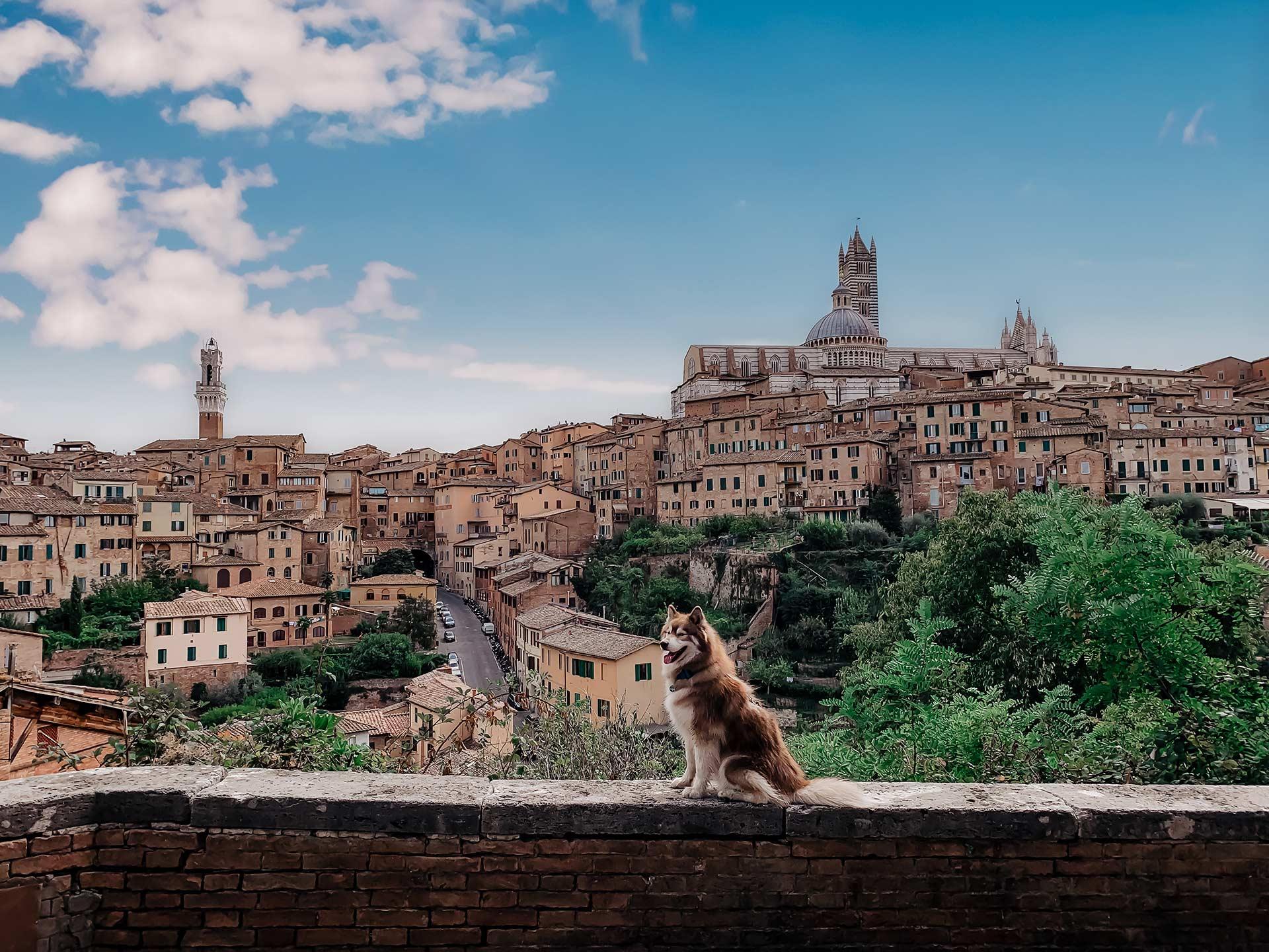 Werbung. Auf meinem Reiseblog verrate ich dir heute alles über unseren Toskana-Roadtrip mit Hund. Wie unser 5-tägiger Kurztrip im Herbst war, welche Orte in der Toskana wir besucht haben und welche Unterkünfte wir empfehlen können, liest du jetzt am Blog. www.whoismocca.com #toskana #roadtrip #kurztrip #mazda3 #drivetogether #mazda3citylife