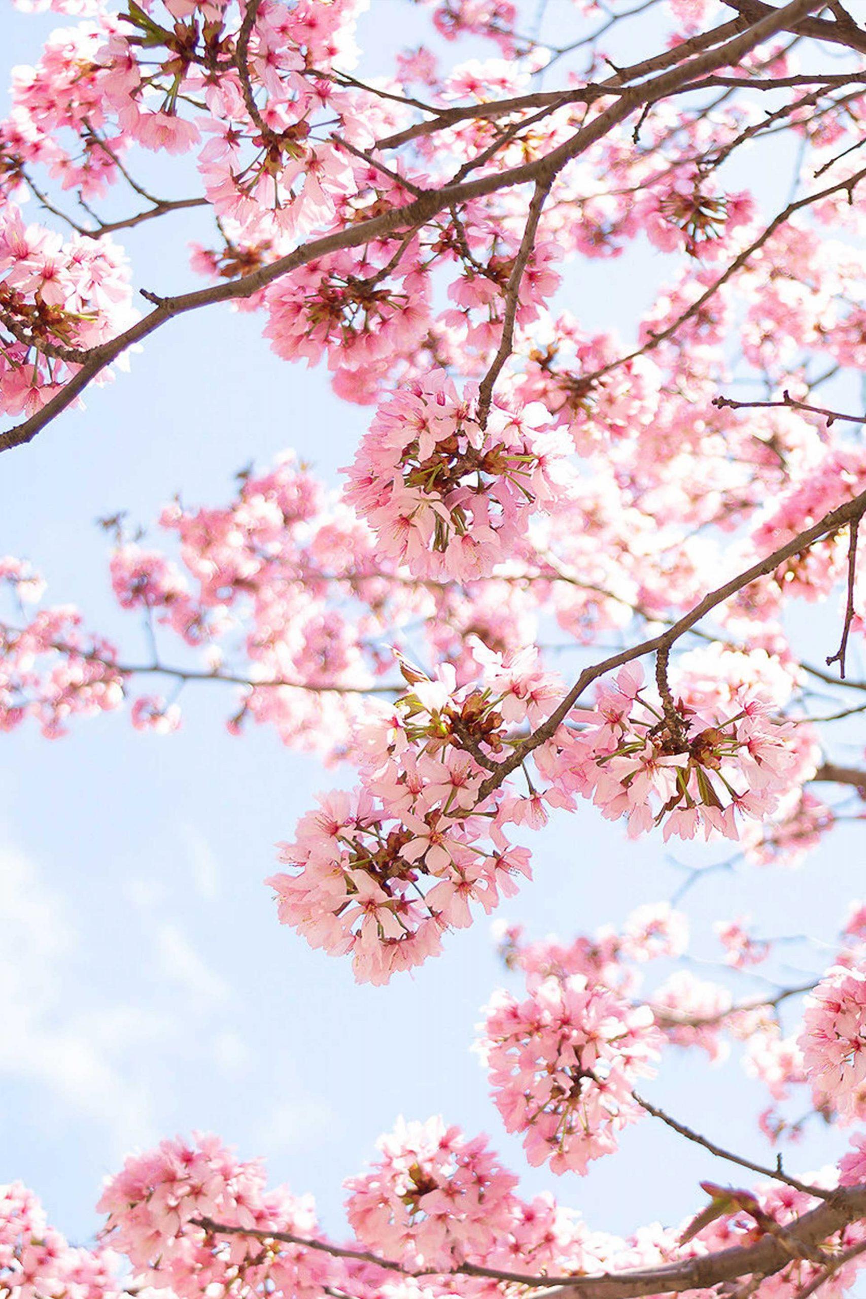 Damit du den perfekten Start in den Frühling hast, gebe ich dir am Lifestyle Blog einige Tipps, die du noch vor Frühlingsbeginn machen solltest. So steht dem Frühlingsanfang nichts mehr im Wege! www.whoismocca.com